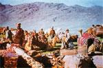 qashqae tribe nomds iran