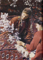 turkmen nomads tribe iran